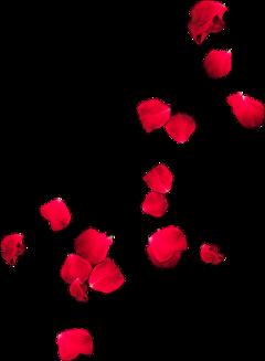 flowers petals floatingflowers redrose freetoedit