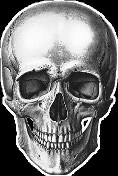 skull skeleton череп скелет black