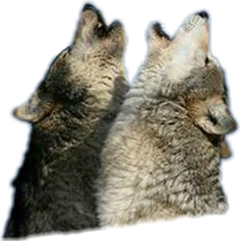 wolves galaxy beauty freetoedit