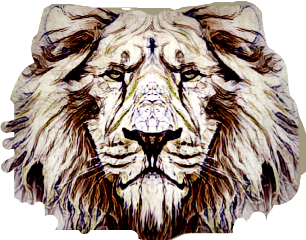 lion animal faceanimal africa kingofthejungle freetoedit