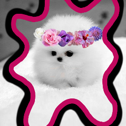 freetoedit dog whitedog puppy flowercrown