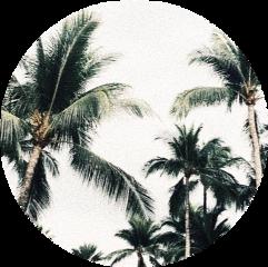 palmeras trees green circle verde