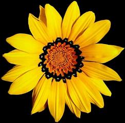 flower fab yellow freetoedit