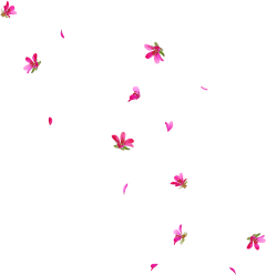 flores freetoedit