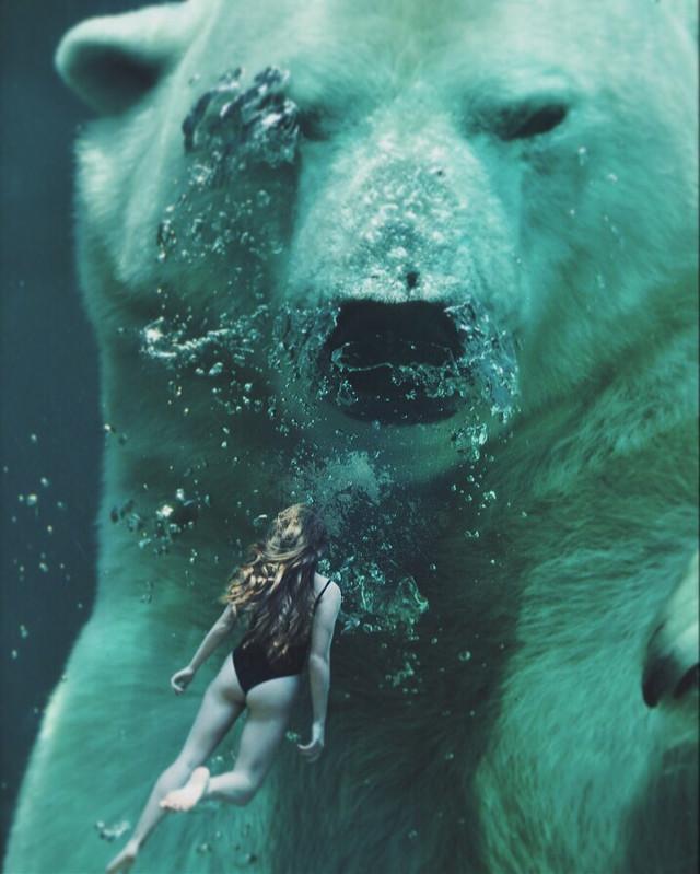 #freetoedit 🙌🏻 #swim #bear #water #underwater #photo #photographer #photography