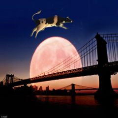 freetoedit cow moon bridge