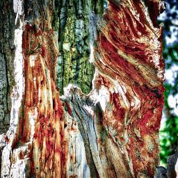 angeleyesimages landscape landscapephotographer landscapephotography nature freetoedit