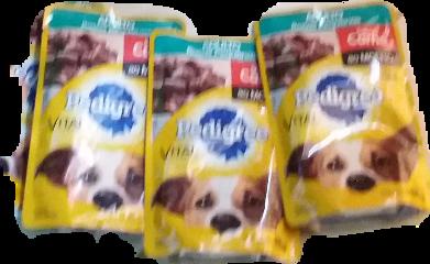 cachorro pedigro freetoedit