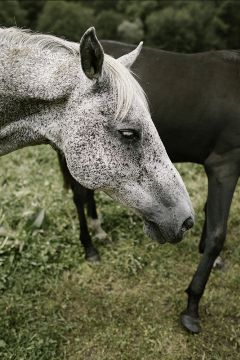 freetoedit horse animal white cute