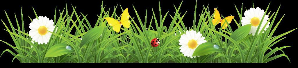 green daisy ladybug flowers nature