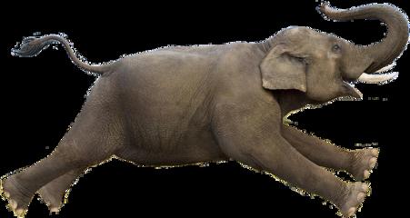 ftestickers freestickers elephantdaystickerremix elephantday elephant