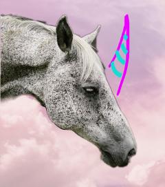 unicorn horse