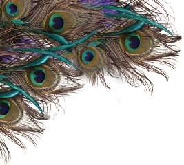 sticker peacock feathers freetoedit