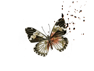 ftestickers butterfly freetoedit
