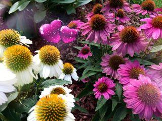 freetoedit nature flowers bokeh