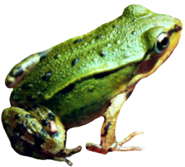 frog froggy frogstickers frogs remixit