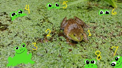 freetoedit frogs pond colorful cute