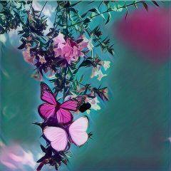 freetoedit beauty butterfly