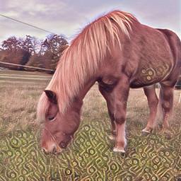 nele horse happy pony isi