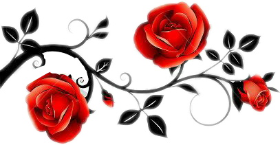 rosesarebeautiful rosas ornamentwithroses redrose trivalroses