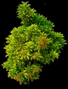 bush freetoedit
