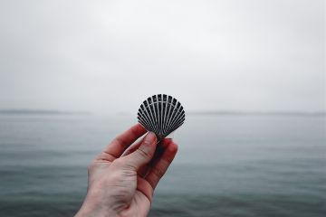 freetoedit shell object hand sea