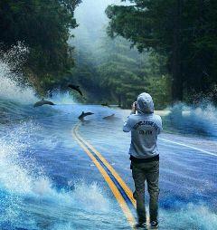 road dolphins roadremix freetoedit