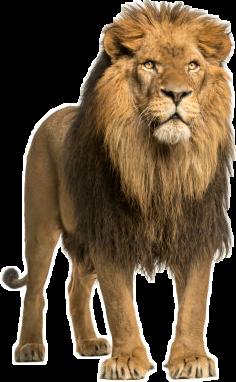 lionlone freetoedit