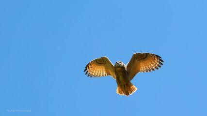 freetoedit funaremenia owl vayots owl