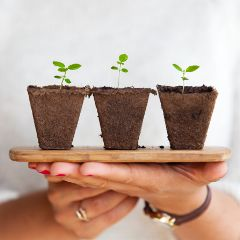 freetoedit plant plants littleones hand