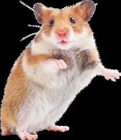мышь freetoedit