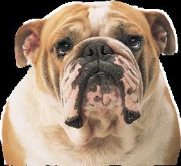 dog sticker puppy animale brown
