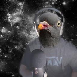 freetoedit leafyishere pidgeon