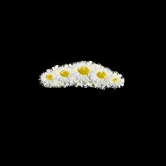 flower flowers fleurs flores ftestickers freetoedit