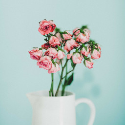 freetoedit flowers minimal pastelcolor objects