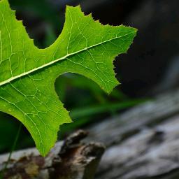 nature life pure green leaf