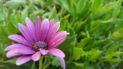 freetoedit. flower photography purple nature freetoedit