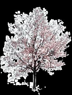 ftestickers tree freetoedit