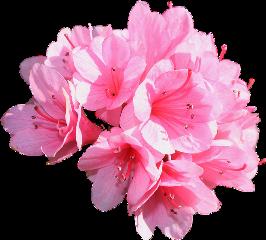 flower pink bouquet love freetoedit