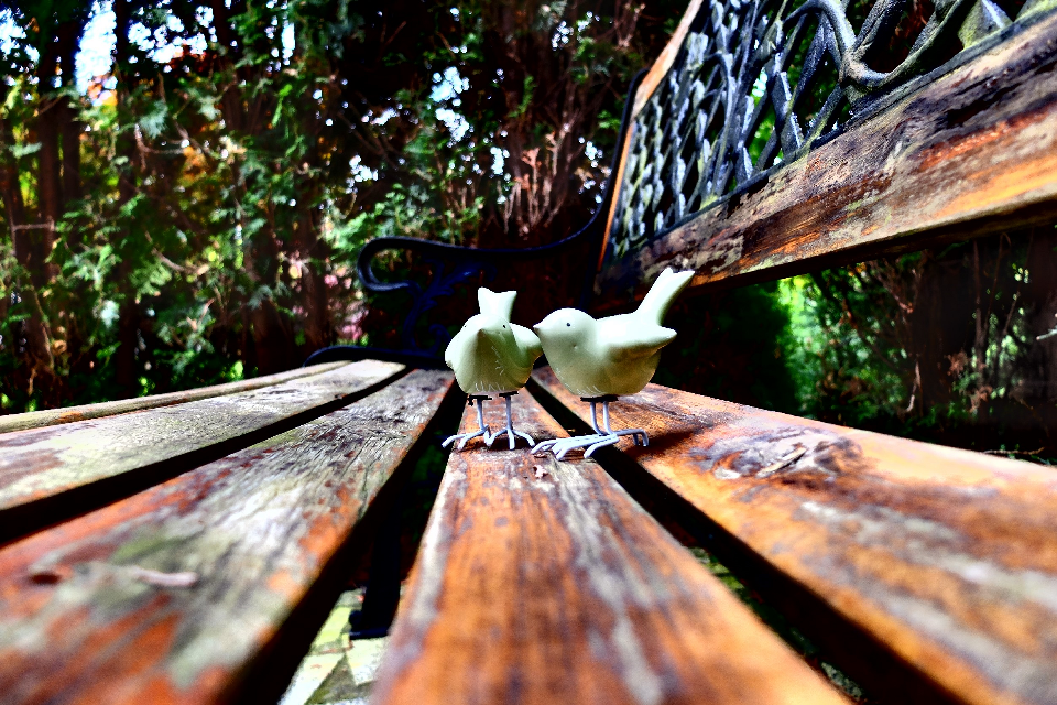 #dpcbenches #bench #benches #birds #greenbirds #photography #photooftheday
