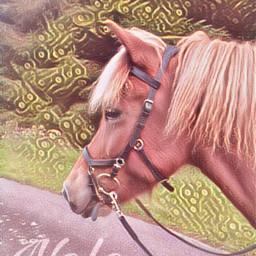 nele isilove pony horse pferd