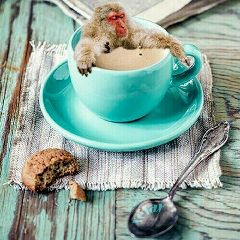 freetoedit remixed morningcoffee relax magdalenemagica