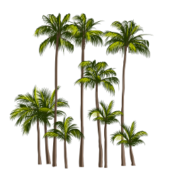 palm palmeras tropicalvibes ftestickers stickers freetoedit