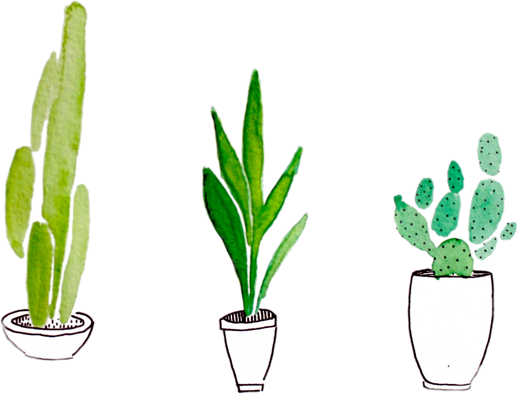 Plant Cactus Tumblr Green Sticker By Heni Iancu