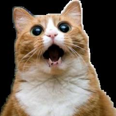 кот котик котэ кошак кошка