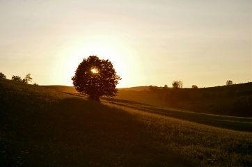 tree thegoldenhour landscape