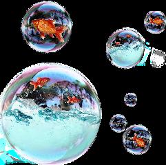 fish water freetoedit