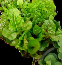 vegetable vegetables freetoedit