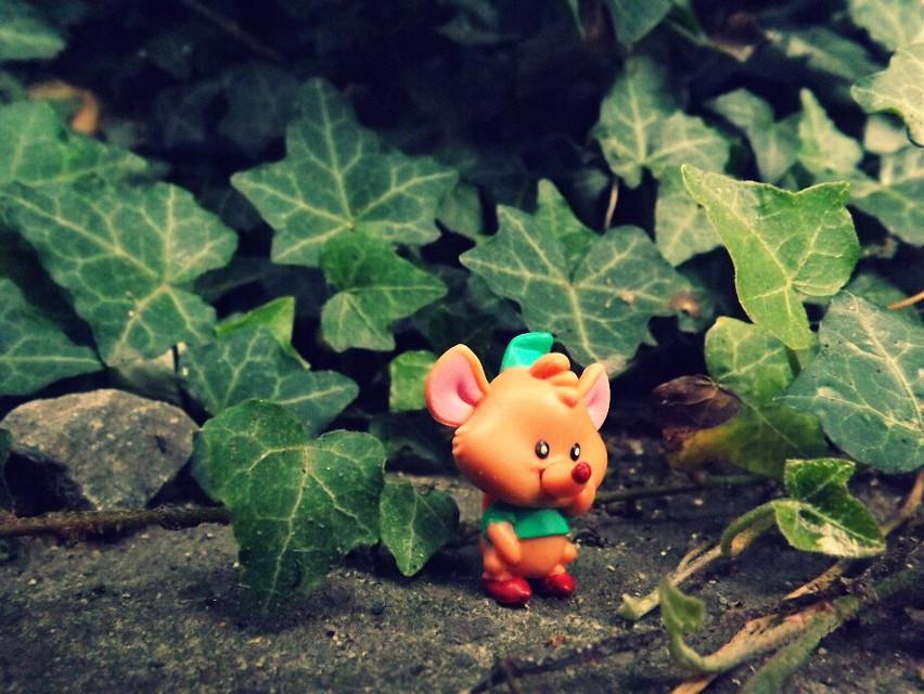#disney #nature #mouse #cinderella #macro #photography
