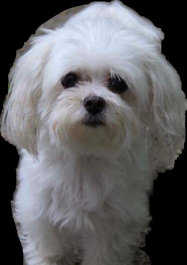 #dog #sweet #summer#freetoedit